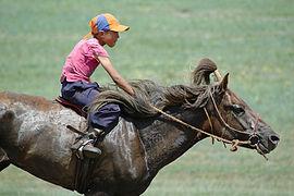 Монгольская лошадь - это... Что такое Монгольская лошадь?